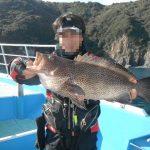 fathom LEVELハリス(プロトモデル)での釣果 オオモンハタ52cm、ハマチ、マダイなど