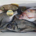 fathom LEVELハリスでの釣果【fathomスタッフ釣行】チヌ・真鯛など