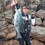 fathom LEVELハリス(プロトモデル)での釣果 口太グレ46cm、43cmなど