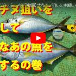 【fathom(ファゾム)スタッフ釣行動画】「大型チヌ狙いを中断して高級なあの魚を捕獲する」の巻