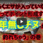 【fathom(ファゾム)スタッフ釣行動画】「しばらくエサが入っていなくても頑張ってポイント形成すれば年無しチヌが釣れちゃう」の巻