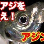 【fathomフィールドテスターNoraさん釣行動画】40センチオーバーのギガアジを狙え!?アジング