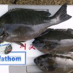 fathom BlueModel2.5 & LEVEL2.5に関する記事【fathomテクニカルモニター川又様】