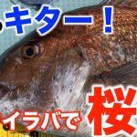 【fathomフィールドテスターNoraさん釣行動画】タイラバで桜鯛(真鯛)を狙う!