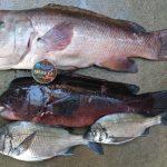 春季チヌ釣り大会のはずが・・・。【堀健一様】