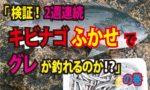 Fishing fathom|検証!2週連続『キビナゴふかせでグレは釣れるのか!?』の巻