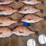 LEVELシリーズとBlueModel 5を駆使して海上釣り堀を満喫!【杉本隼一様】