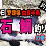Fishing fathom|【6月10日】愛媛県 由良半島『石鯛釣り』の巻