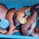 海上釣り堀釣行「獲る」ための糸の重要性【杉本隼一様】