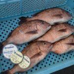 【杉本隼一様】12月の海上釣り堀釣行【LEVELシリーズ】【Bluemodel】