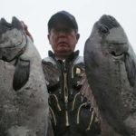 祝!年間100枚超え fathom 石鯛ライン【釣果】其の弐拾玖(二十九)