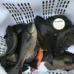 厳しい状況のなか、釣果を出す ブルーモデル1.75号とレベル1.5号【多賀英二様】